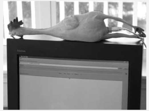 Fichier:Xcontinuous-integration-chicken.png